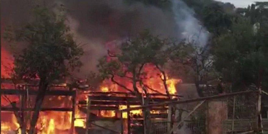 İstanbul Büyükada'da yangın çıktı.