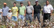 Pamuk üreticisi sıkıntıda