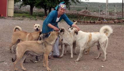 Köpekleri için evsiz kaldı