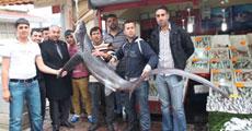 110 kiloluk köpek balığı yakalandı