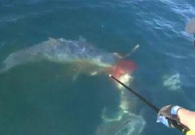 Köpek balığının aniden ortaya çıkmasıyla büyük heyecan yaşadı.