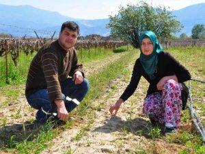 Manisalı aile, ilk salep hasadını bekliyor