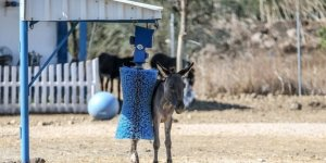 Emekli yük ve çiftlik hayvanları için liselilerden örnek proje