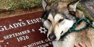 Sahibinin mezarı başında ağlayan köpeğin görüntüsü