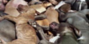 evdeki dondurucuda 30 köpek leşi bulundu