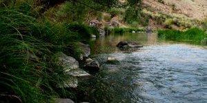 Ağacın Gölgesi, Suyun Sesi Yoksa İnsan da Yok