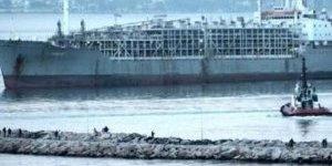 Yüzen ahır 9 bin 300 büyükbaş hayvan getirdi