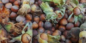 Üreticiden 9 liraya alınan fındık işlenip 60 liraya satılıyor